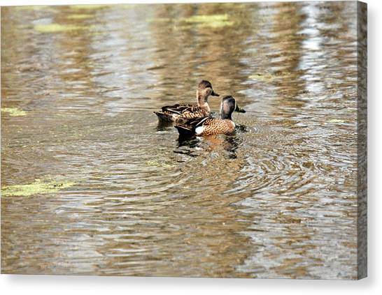 Ducks Together Canvas Print by Teresa Blanton