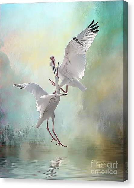 Duelling White Ibises Canvas Print