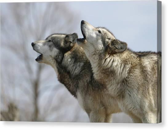 Duet Howl Canvas Print