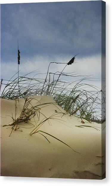 Dune And Beach Grass Canvas Print