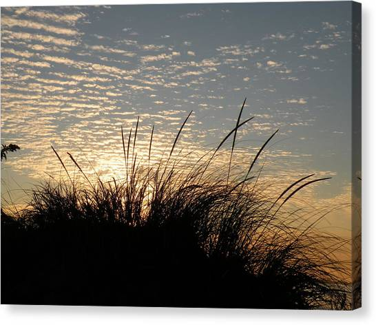 Dune Grass Canvas Print by Donald Cameron