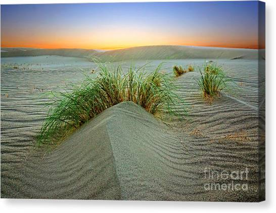 Dune Grass Of Bruneau Idaho Canvas Print