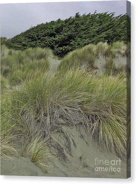 Bodega Dunes #3 Canvas Print