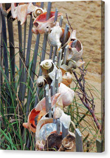 Dune Shell Fence Canvas Print