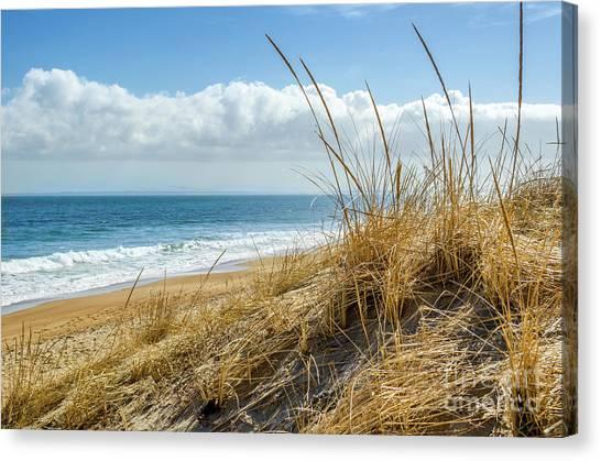 Dunes At Plum Island Canvas Print