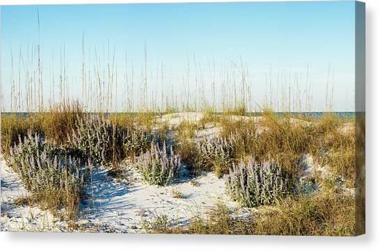 Dunetop Blue Lupine - Wide Canvas Print
