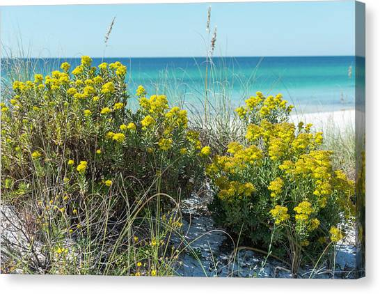 Dunetop Wildflowers By The Beach Canvas Print