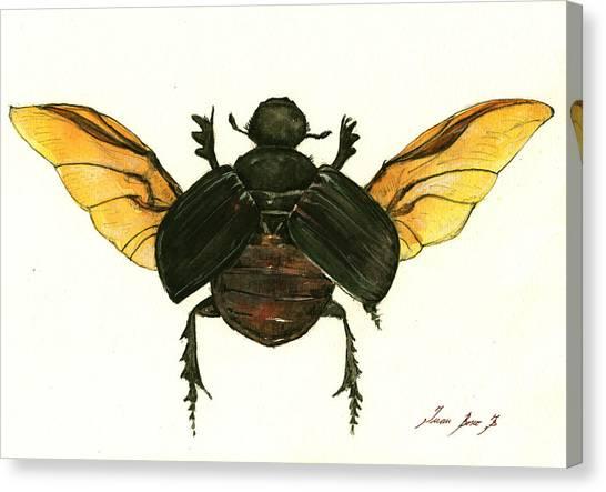 Beetle Canvas Print - Dung Beetle by Juan Bosco