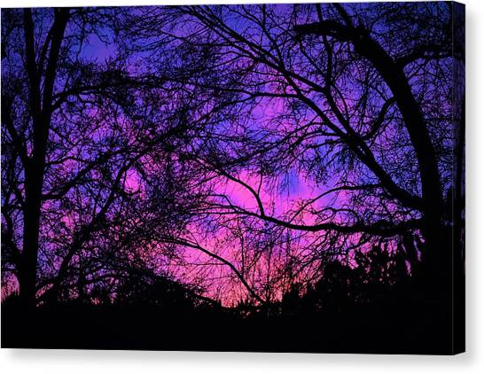 Dusk And Nature Intertwine Canvas Print