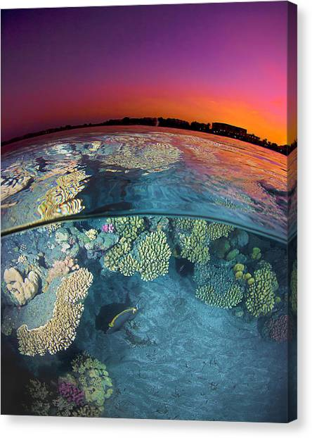 Reef Canvas Print - Dusk At The Red Sea Reef by Henry Jager