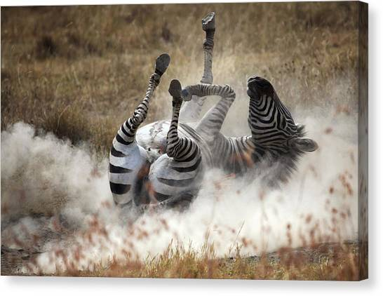 Zebras Canvas Print - Dust Bath by Michel Guyot
