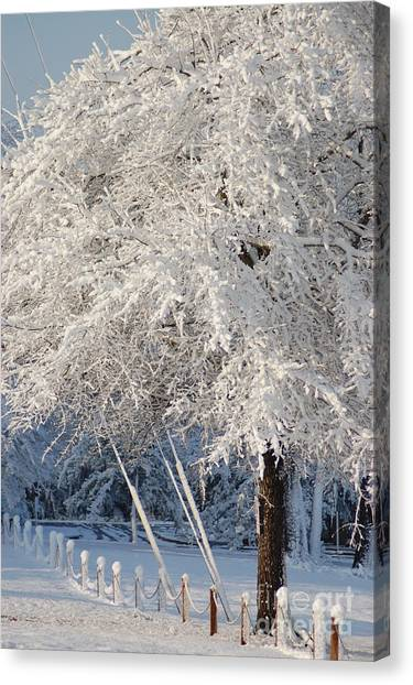 Dusted With Powdered Sugar Canvas Print