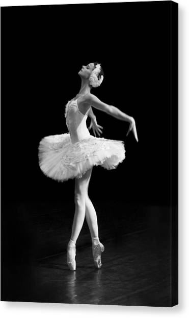 Dying Swan I Alternative Size Canvas Print