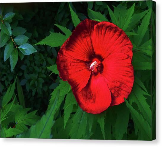 Dynamic Red Canvas Print