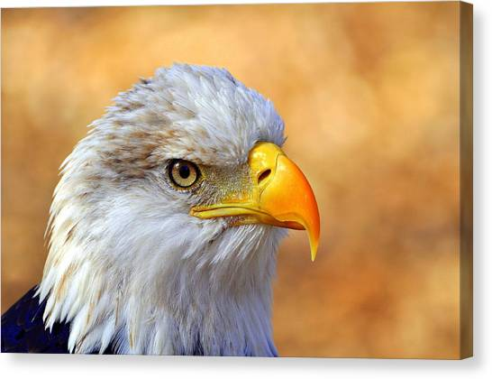 Eagles Canvas Print - Eagle 7 by Marty Koch