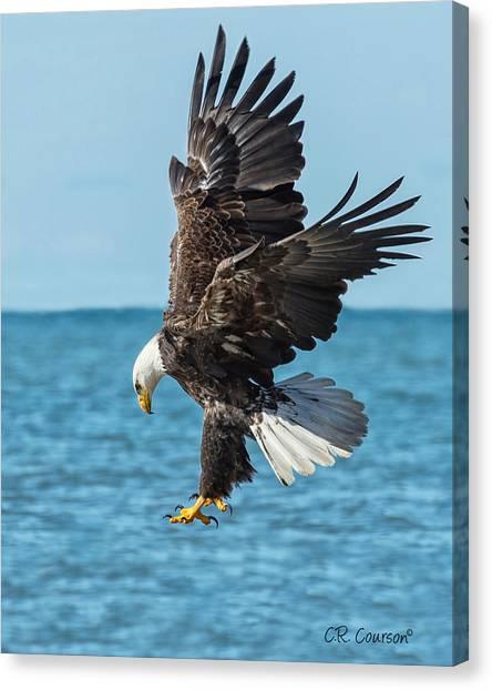 Eagle Dive Canvas Print