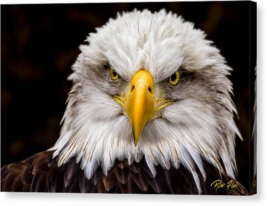 Defiant And Resolute - Bald Eagle Canvas Print