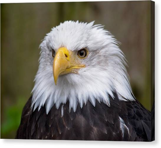 Eagle In Ketchikan Alaska Canvas Print