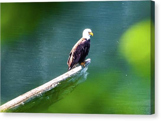 Eagle In Lake Canvas Print