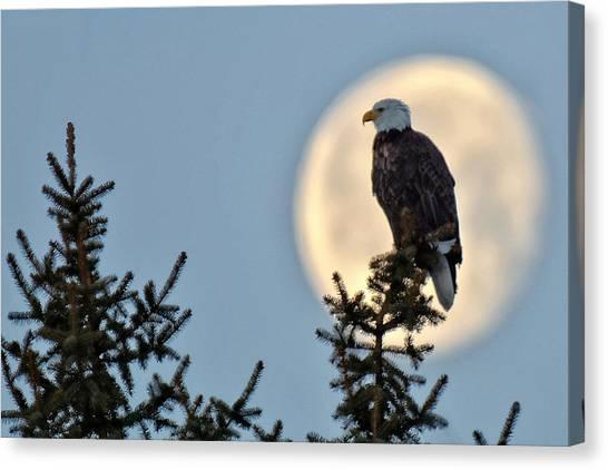 Eagle Moon Canvas Print