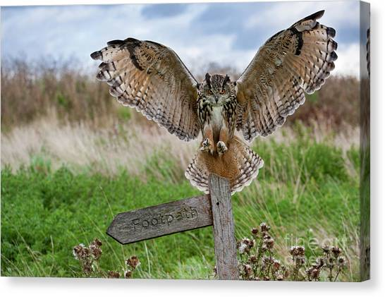 Eagle Owl On Signpost Canvas Print