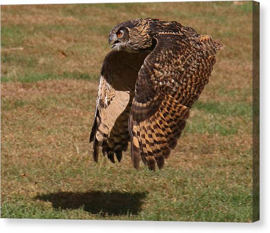Canvas Print featuring the photograph Eagle Owl On The Hunt 2 by William Selander