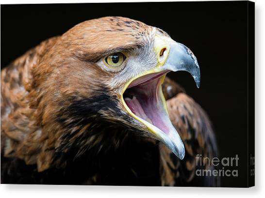 Eagle Power Canvas Print