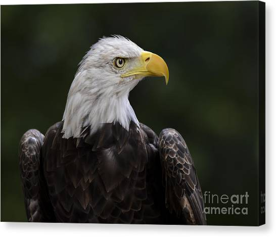 Eagle Profile 2 Canvas Print