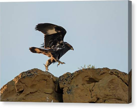 Eagle Rock Hopping Canvas Print by Loree Johnson