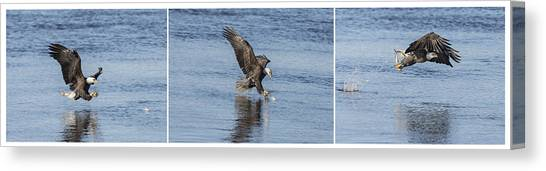 Eagle Triptych 2016-2 Canvas Print