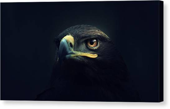 Eagles Canvas Print - Eagle by Zoltan Toth
