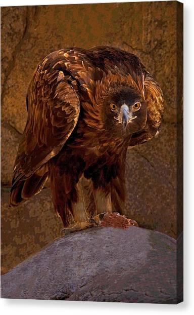 Eagle's Stare Canvas Print
