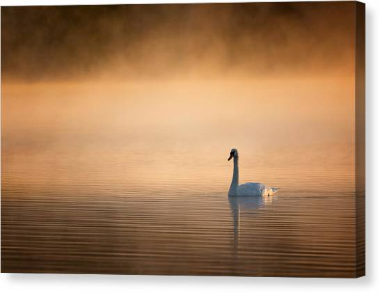 Sunrise Canvas Print - Early Bird 2015 by Bill Wakeley