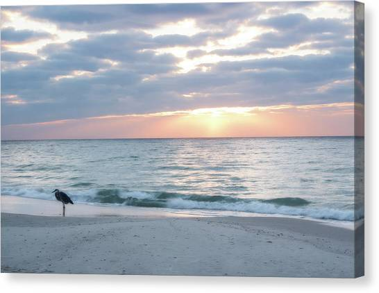 Early Bird Canvas Print