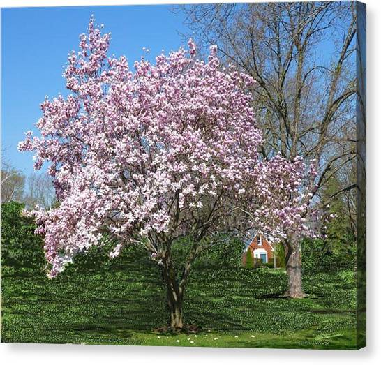Early Blooms Canvas Print