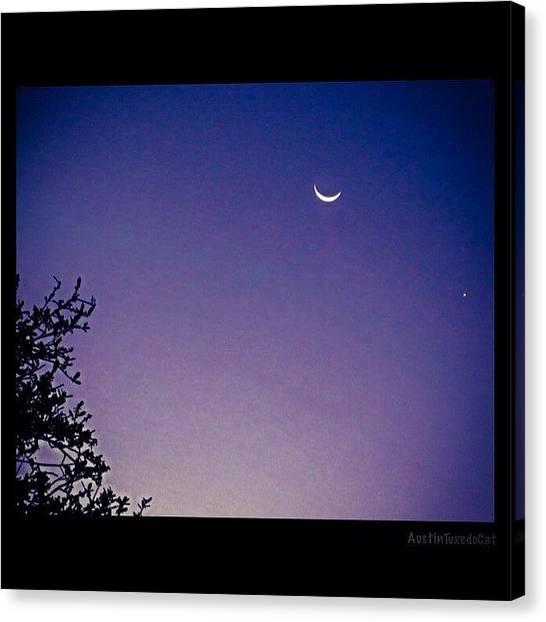 Venus Canvas Print - Early #evening #waxingcrescentmoon And by Austin Tuxedo Cat