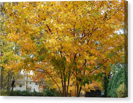 Early Fall Canvas Print by Gregory Smith
