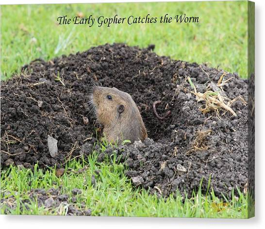 Early Gopher Catches The Worm Canvas Print