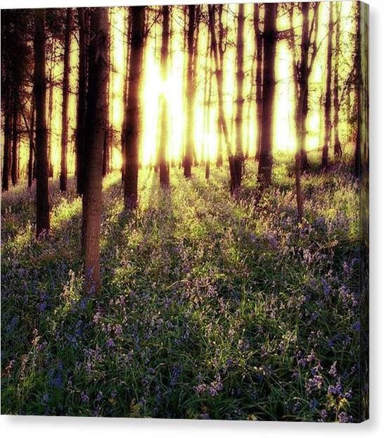 Forests Canvas Print - Early Morning Amongst The by John Edwards