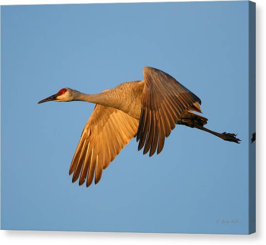 Early Morning Flight Canvas Print