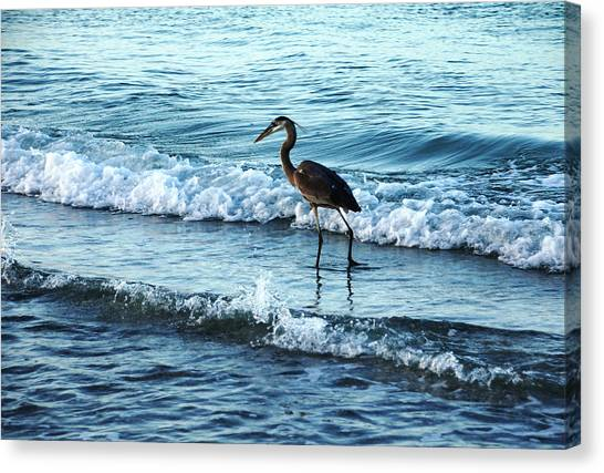 Early Morning Heron Beach Walk Canvas Print