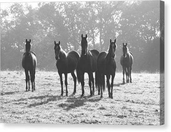 Early Morning Horses Canvas Print