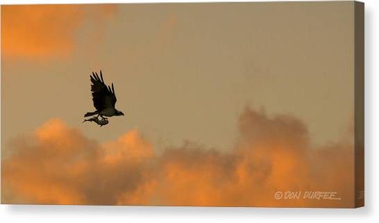 Canvas Print - Early Morning Hunt by Don Durfee