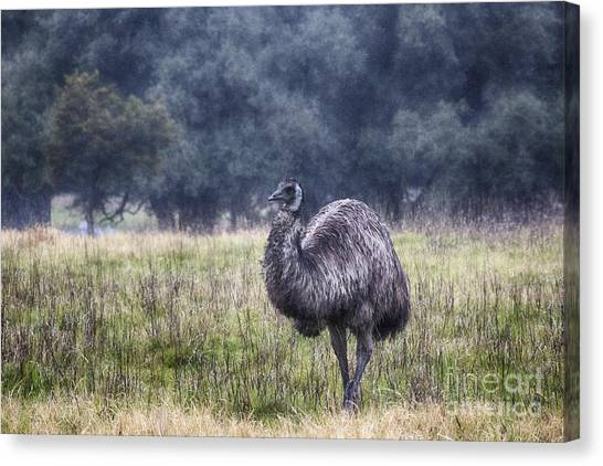 Emus Canvas Print - Early Morning Stroll by Douglas Barnard