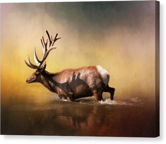Elk Canvas Print - Early Morning Swim by David and Carol Kelly