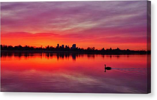 Early Morning Swim Canvas Print