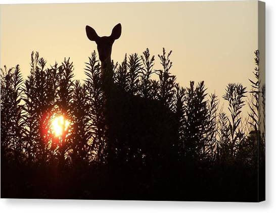 Early Morning Visitor Canvas Print by Laurie Prentice