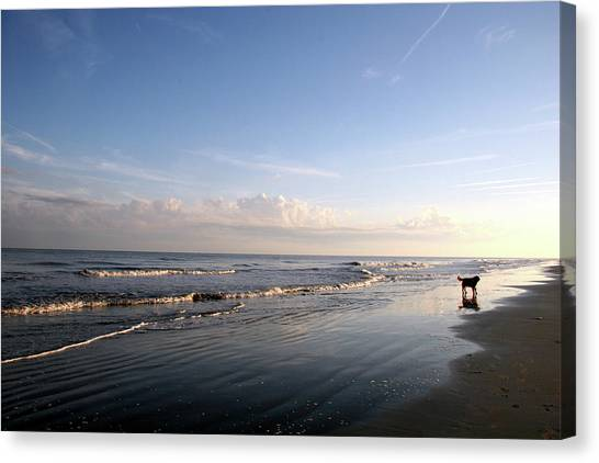 Early Morning Walk Canvas Print by Roxanne Marshal