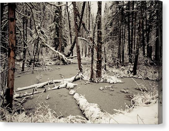 Early Winter Canvas Print by Todd Bissonette