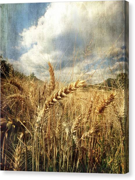 Ears Of Corn Canvas Print